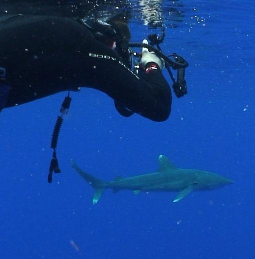 shark_and_jeff.jpg