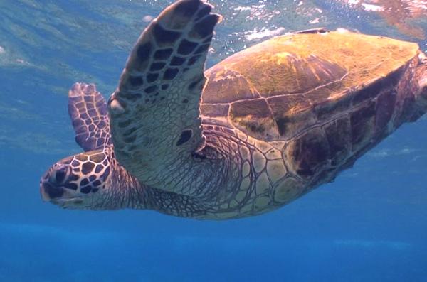 20090727_turtle